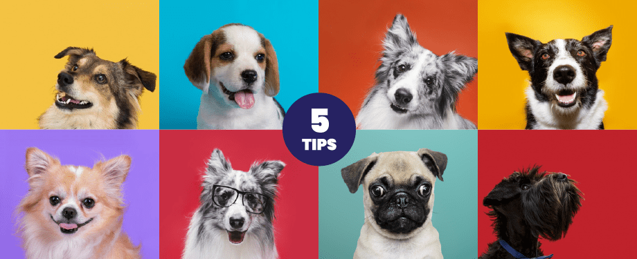 Pawsm blog image. 5 tips before getting a dog.