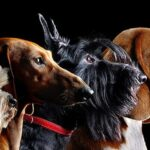 FCI Breed Standards and  PAWSM Dog Diet and Nutrition App